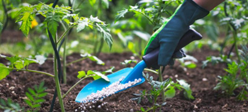 jardineria solidaria_2