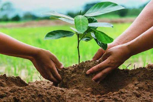team building reforestamos juntos